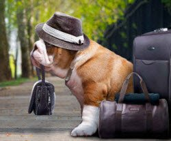 photo of dog with luggage