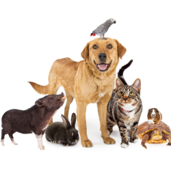 Photo of multiple pets