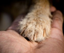 Photo of a dog's paw in a person's hand